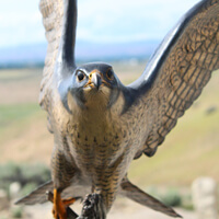 """Fall Flight""-Sculpture Of A Peregrine Falcon"